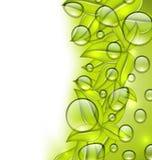 Waterdalingen op verse groene bladerentextuur, exemplaarruimte voor uw t Stock Afbeeldingen