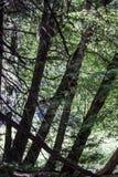 Waterdalingen van Yosemite stock afbeelding