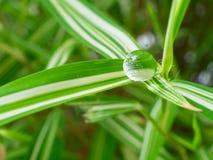 waterdrop στο μικρό φύλλο φυτών Στοκ Φωτογραφίες