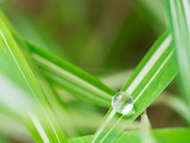 waterdrop στο μικρό φύλλο φυτών Στοκ φωτογραφία με δικαίωμα ελεύθερης χρήσης