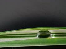 waterdrop στο μικρό φύλλο φυτών Στοκ εικόνες με δικαίωμα ελεύθερης χρήσης