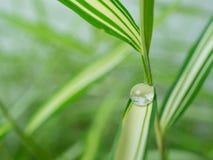 waterdrop στο μικρό φύλλο φυτών Στοκ φωτογραφίες με δικαίωμα ελεύθερης χρήσης