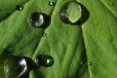 waterdrop листьев Стоковые Изображения