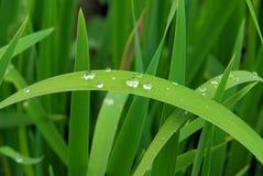 Waterdrop на листьях стоковая фотография