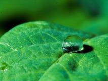 waterdrop Стоковое Изображение