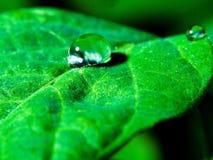 waterdrop Стоковые Изображения RF