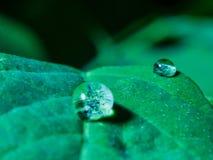 Waterdrop Imagem de Stock Royalty Free