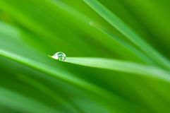 Waterdrop Stock Image