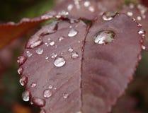 waterdrop fotografering för bildbyråer