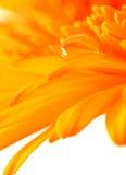 Waterdrop auf einem Blatt Stockfoto