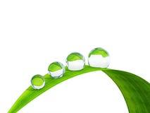Waterdrop auf einem Blatt des Grases. Lizenzfreies Stockfoto