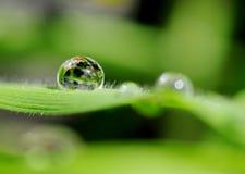 Waterdrop auf gras im Sonnenschein Stockfotos
