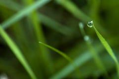 Waterdrop auf Laub morgens Stockfotografie