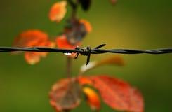 Waterdrop barbedwire Στοκ Φωτογραφίες