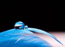 Waterdrop blu su una piuma Fotografia Stock