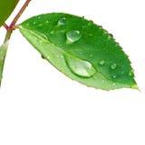 Waterdrop en la hoja Imagen de archivo libre de regalías