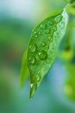 Waterdrop en la hoja Fotos de archivo