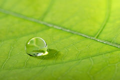 Waterdrop en una hoja Foto de archivo libre de regalías