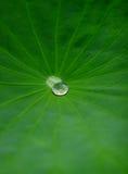 waterdrop för leaflotusblommath Arkivbilder