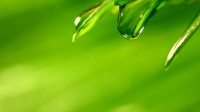 Waterdrop falling from grass Stock Image