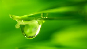 Waterdrop falling from grass stock video footage
