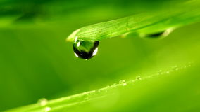 Waterdrop falling from grass stock video