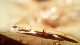 waterdrop goldlight Stock Afbeeldingen