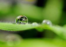 Waterdrop on gras in the sunshine. Glossy waterdrop on gras in the sunshine Stock Photos