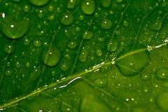 Waterdrop IV Stock Image