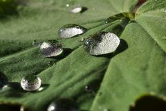 Waterdrop on a leaf Royalty Free Stock Photography