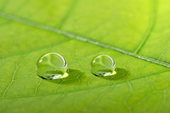 Waterdrop on a leaf Royalty Free Stock Images