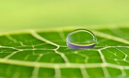 Waterdrop on a leaf. Swallow DOF stock image