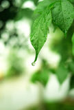 Waterdrop on the leaf Stock Image