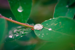 Waterdrop on leaf Royalty Free Stock Photo
