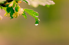Waterdrop on leaf Stock Images