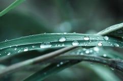 Waterdrop na trawie Obrazy Royalty Free