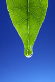 Waterdrop on new green leaf royalty free stock photos