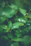 Waterdrop op blad na de regen Stock Fotografie