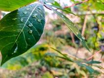 waterdrop op de bladeren in de ochtend royalty-vrije stock foto's
