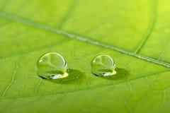 Waterdrop op een blad royalty-vrije stock afbeeldingen