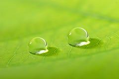 Waterdrop op een blad Royalty-vrije Stock Foto's
