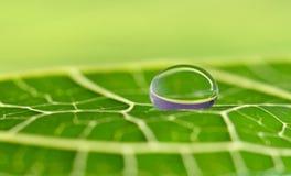 Waterdrop op een blad stock afbeelding
