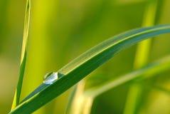 Waterdrop op gras Royalty-vrije Stock Fotografie