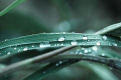 Waterdrop op gras Royalty-vrije Stock Afbeeldingen