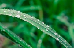 Waterdrop på gräs Arkivfoto
