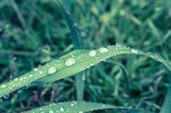 Waterdrop på gräs Royaltyfri Fotografi