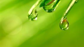 Waterdrop que baja de hierba Imagenes de archivo