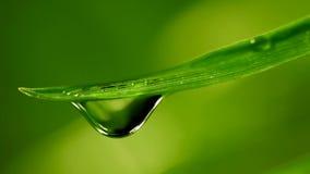 Waterdrop som faller från gräs