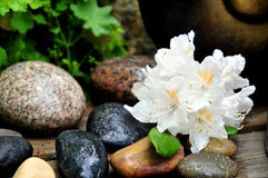 Waterdrop Stone Flower Stock Photography