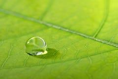 Waterdrop su un foglio Fotografia Stock Libera da Diritti